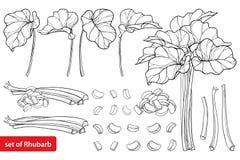与概述在白色背景在黑色隔绝的大黄或感冒菜的传染媒介集合 等高裁减和整个茎片断 向量例证