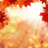 与槭树叶子和太阳Ligth的秋天背景 图库摄影