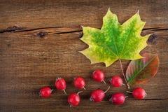 与槭树叶子和红色莓果的秋天木背景 库存照片