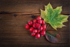与槭树叶子和红色莓果的秋天木背景 库存图片