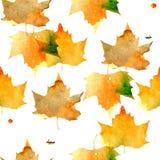 与槭树叶子的图象的样式,充满黄色,橙色,绿色树荫水彩纹理  库存图片