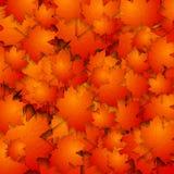 与槭树叶子的抽象秋天背景 免版税库存图片