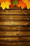 与槭树叶子的木背景 库存照片