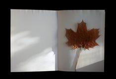 与槭树叶子的秋天书 库存图片