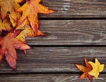 与槭树叶子的秋天背景 免版税库存照片