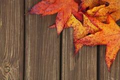 与槭树叶子的秋天背景 免版税库存图片