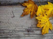 与槭树叶子的秋天背景 库存图片