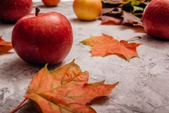 与槭树叶子的红色成熟苹果 免版税库存图片