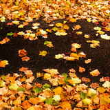 与槭树叶子的美好的秋天背景关闭  与拷贝空间的五颜六色的明亮的图象您的设计的 免版税库存图片
