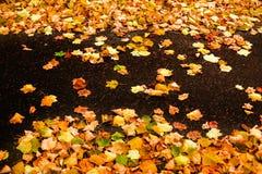 与槭树叶子的美好的秋天背景关闭  五颜六色 图库摄影