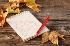 与槭树和橡子在木ba的a叶子的秋天背景  库存照片