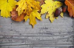 与槭树的秋天背景和橡木叶子和橡子 免版税库存图片