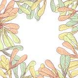 与槭树种子的花卉框架  库存图片