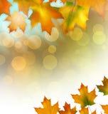 与槭树黄色的秋天背景离开,明亮的秋天 免版税库存照片