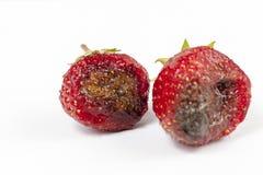 与模子的草莓 免版税库存照片