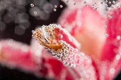 与模糊的兰花瓣和泡影的抽象水下的构成 免版税库存照片