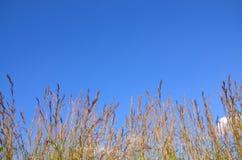 与模糊的美妙的天空红色草开花 免版税库存照片