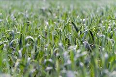 与模糊的零件的绿草领域 免版税库存照片