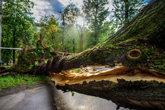 与横跨路下落的一个巨大的裂缝的硕大树由于严厉飓风在其中一个莫斯科庭院中  库存图片