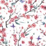 与樱桃开花的分支的水彩无缝的样式  皇族释放例证