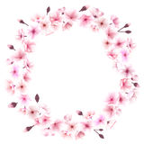与樱花的春天花圈 安置文本 库存图片