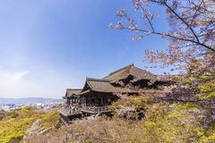 与樱花的Kiyomizu Dera寺庙 库存图片