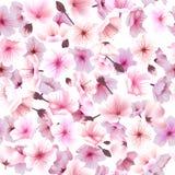 与樱花,开花的东方人,佐仓的无缝的样式开花新春佳节Hanami 免版税库存图片