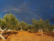 与橄榄树和彩虹的风雨如磐的风景 库存照片