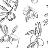 与橄榄树枝的传染媒介无缝的样式 库存图片