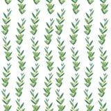 与橄榄树枝的无缝的水彩样式 免版税库存图片