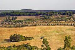 与橄榄树的托斯坎山坡 库存照片