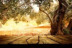 与橄榄树的木桌 免版税库存图片