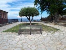 与橄榄树的长凳 库存照片