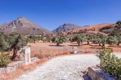 与橄榄树种植园的美好的风景 免版税图库摄影