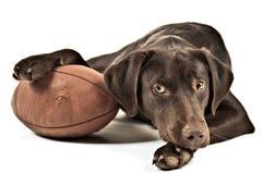 与橄榄球的狗