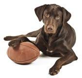 与橄榄球的狗 免版税图库摄影