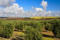 与橄榄色的凹线的风景 免版税库存图片