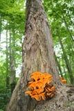 与橙色南瓜真菌的橡木 免版税库存照片
