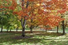 与橙色叶子的美丽的树 免版税图库摄影
