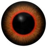 与橙色和红色回合,大黑学生的青蛙3d眼珠,在白色背景,动物眼睛 皇族释放例证