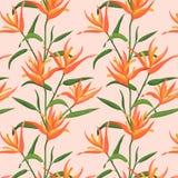 与橙色天堂鸟的无缝的样式 库存图片