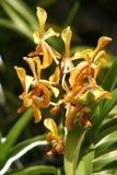 与橙色斑点的黄色花 库存图片