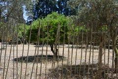 与橙色果树的乡下风景 免版税库存图片