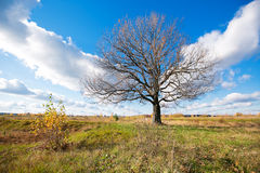 与橙色橡树的秋天风景在领域 自然-在晴朗 美丽如画的看法  在阳光下 库存照片