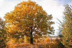 与橙色橡树的秋天风景在领域 自然-在晴朗 美丽如画的看法  在阳光下 免版税库存图片