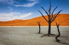 与橙色沙丘的死的树在DeadVlei的背景,纳米比亚沙漠,纳米比亚中 免版税图库摄影