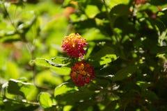 与橙色活泼的颜色的壮观的花-正面图 图库摄影