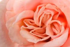 与橙色瓣的花 库存图片