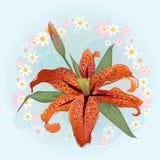 与橙色百合花的贺卡在花卉背景 免版税库存照片