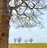 与橙色真菌和啄木鸟孔的大树 库存图片
